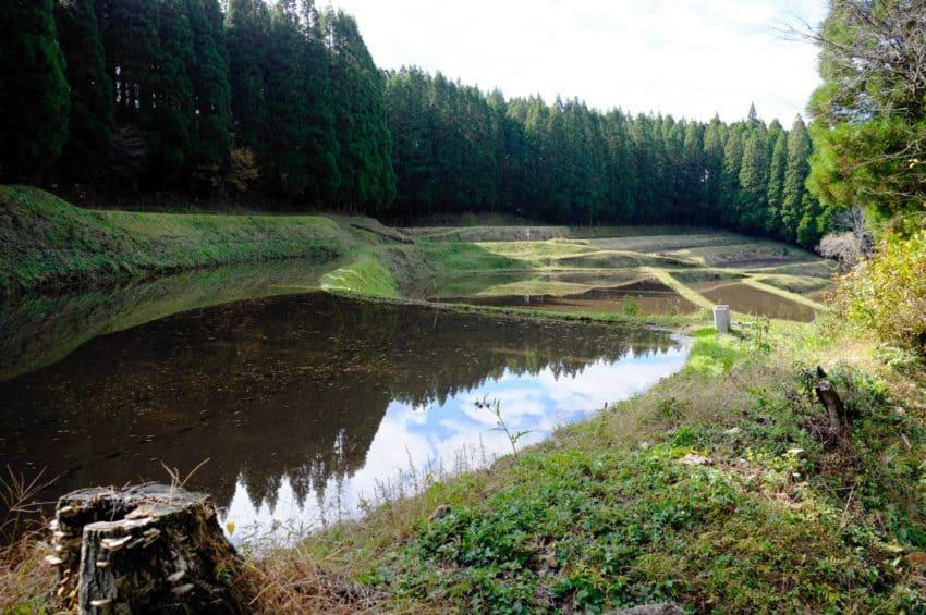 平野台高原展望所から黒川温泉へ。稲刈りの終わった棚田。