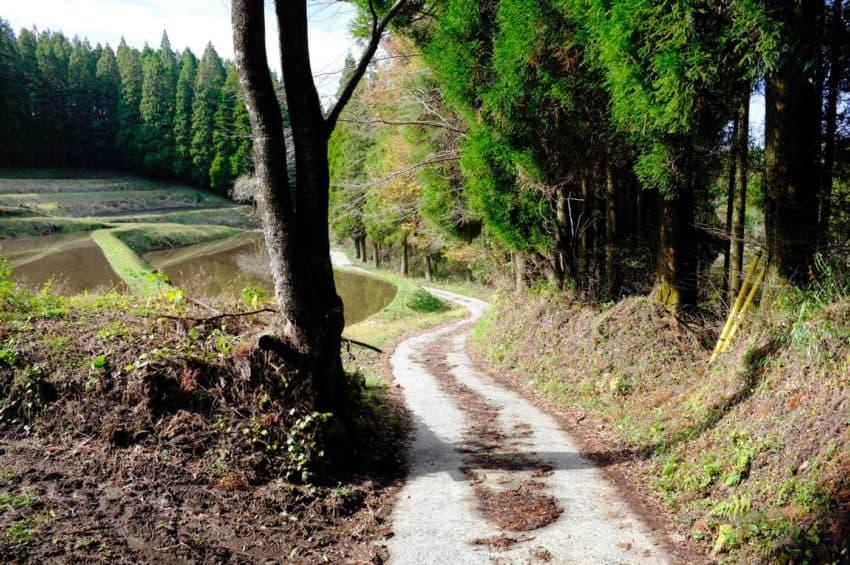 平野台高原展望所から黒川温泉へ。人気の無い山道。