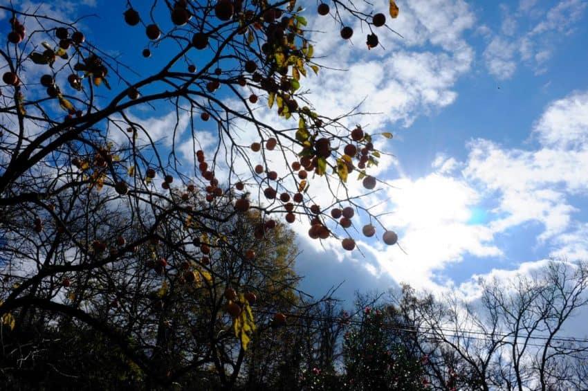黒川温泉。よく晴れた一日。