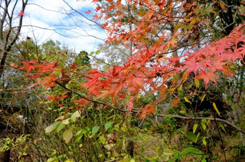 黒川温泉。まだ紅葉は残ってた。