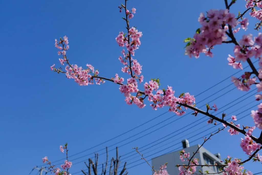 X100Fで撮った桜